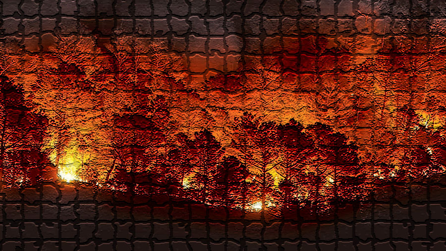 Nueva Ley de Montes. Efectos de la deforestación